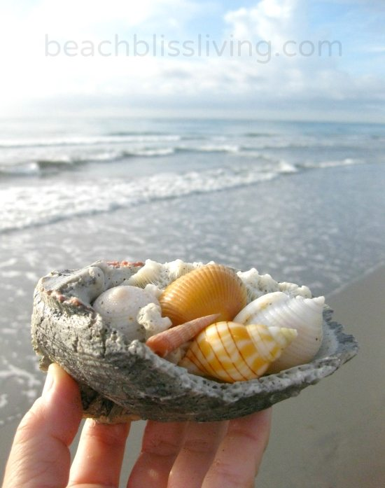 Shelling in Delray Beach