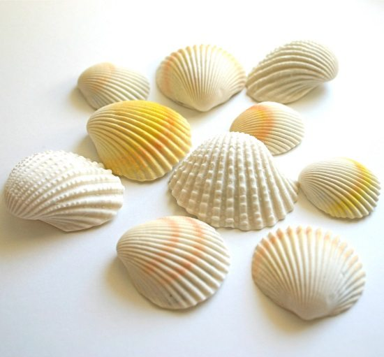 Chocolate Filled Cany Seashells