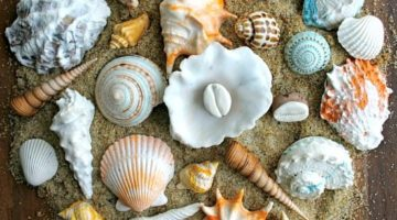 Incredible Edible Seashells & Sea Life by Andie's Specialty Sweets