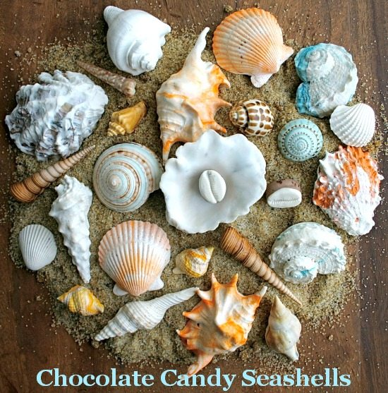 Chocolate Candy Seashells