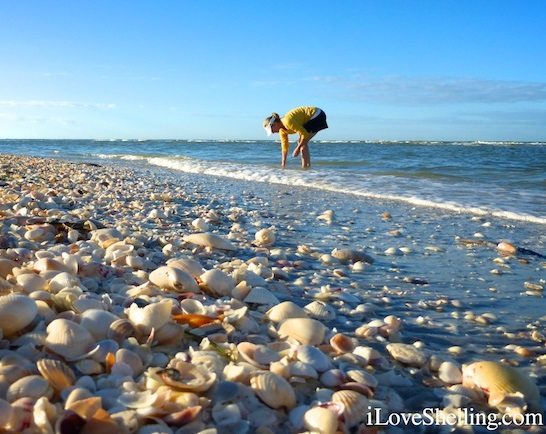 Sanibel Florida: The World's Best Shelling Beaches