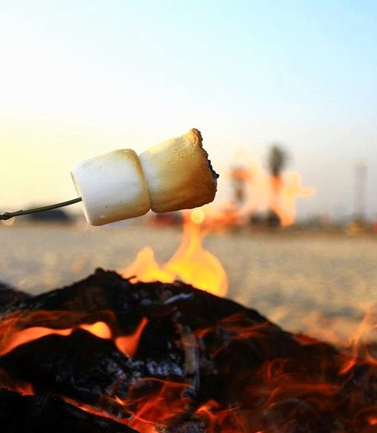 Image result for beach campfire