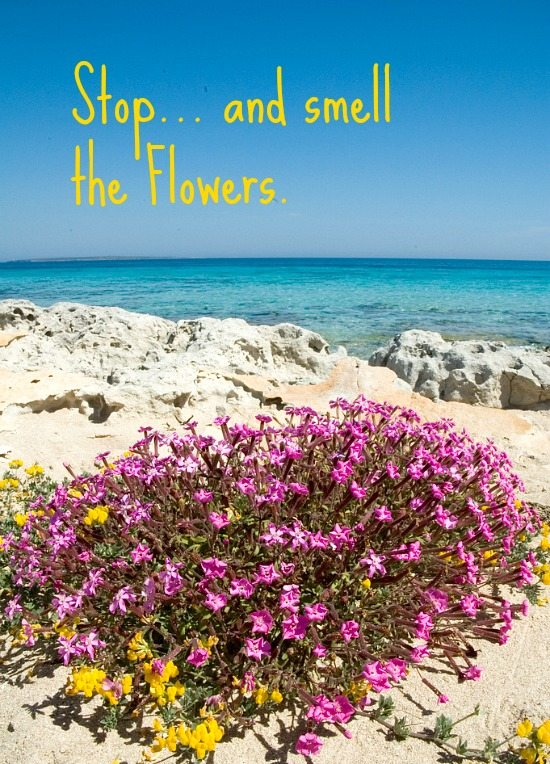 Formentera Beach with Flowers