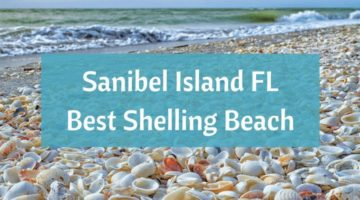 Sanibel Island FL – The World's Best Shelling Beaches