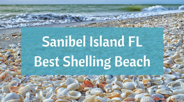 Sanibel Island Fl The World S Best Shelling Beaches Beach Bliss Living