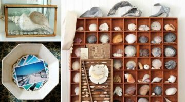 Savor your Beach Memories with Shell Decor & Photo Displays -Ideas from a Stylist