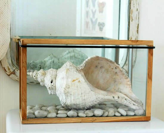 Shell Decor in Glass Box