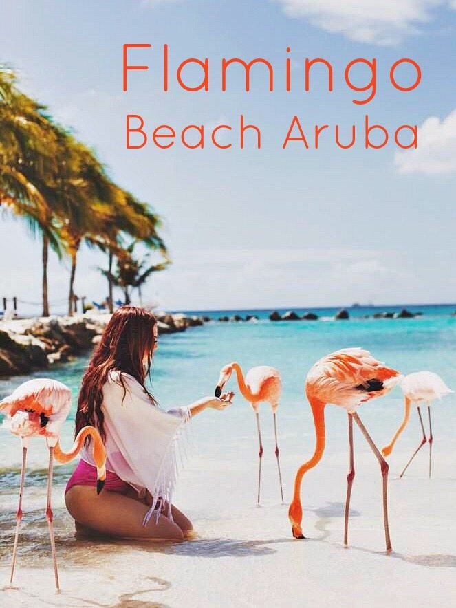 Feeding Flamingos in Aruba