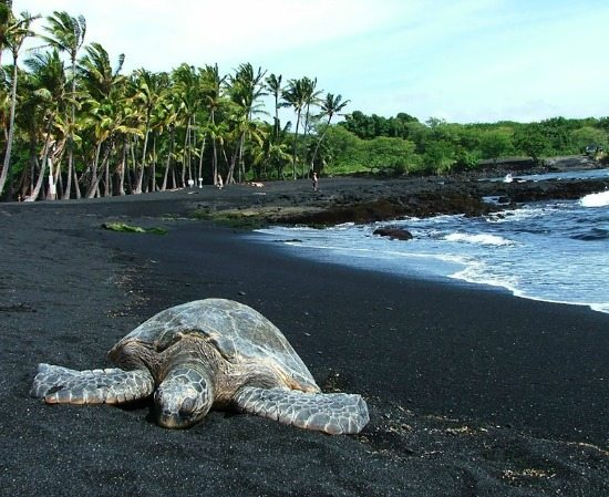 Black Sand Beach in Hawaii