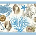 Seashore Collection by Michel Design Works