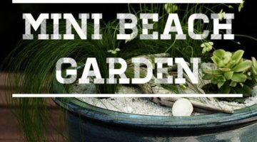 Create your very own Mini Beach Garden