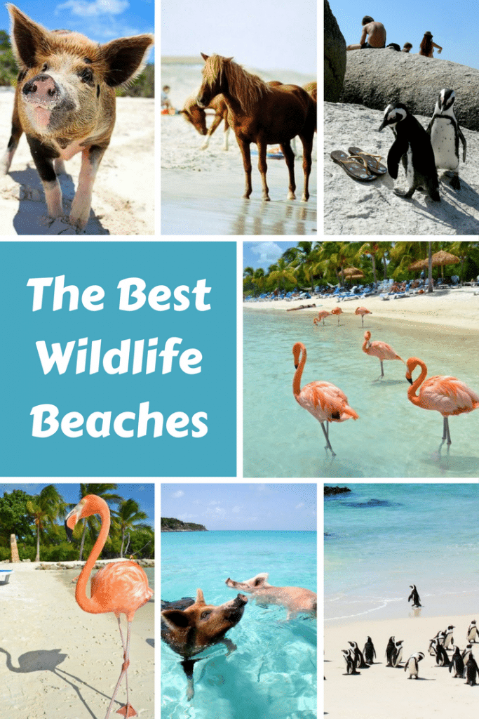 Beaches where you can swim with the wildlife, what's cooler than that? Check out the complete list if wildlife beaches!